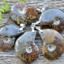 Ripats - Ammoniit (tervik)