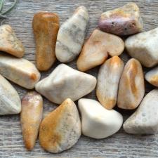 Fossiilkorall ehk kivistunud korall