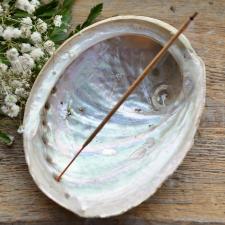 Viirukialus - Abalone pärlikarp (13-16cm)