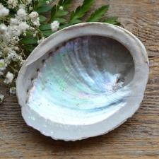 Viirukialus - Abalone Pärlikarp (10-11.5cm)